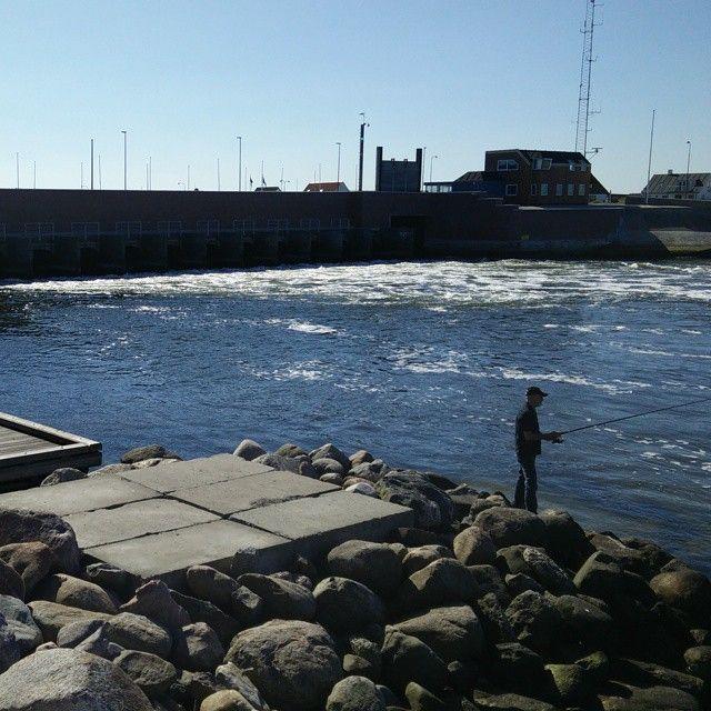 Der fiskes efter hornfisk i #thorsminde #visitdenmark #morogfarpåtur