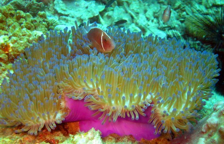 coral - Google keresés