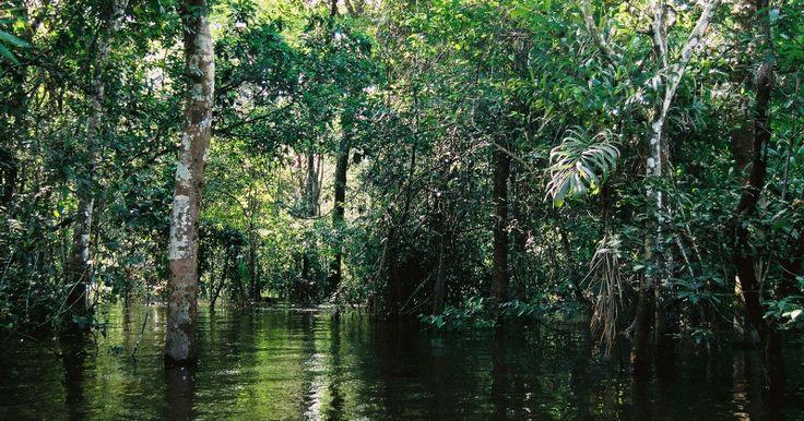 """Nella grande foresta pluviale dell'Amazzonia, si insegna a entrare in contatto con """"le piante-maestro"""". In comunicazione col regno vegeta..."""