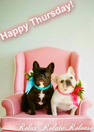 Happy Thursday quotes cute quote dogs days of the week good morning thursday thursday quotes