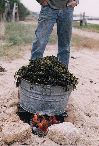 preparing a lobster bake 8