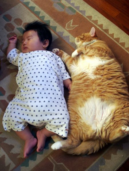 89 Best Images About Cute Fat Things On Pinterest