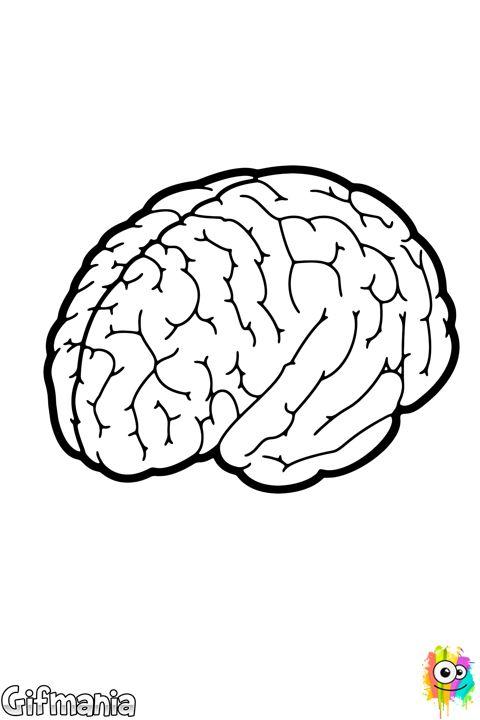 16 mejores imgenes de Cerebro cartoon en Pinterest  El cerebro