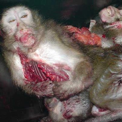 how to stop animal cruelty in australia