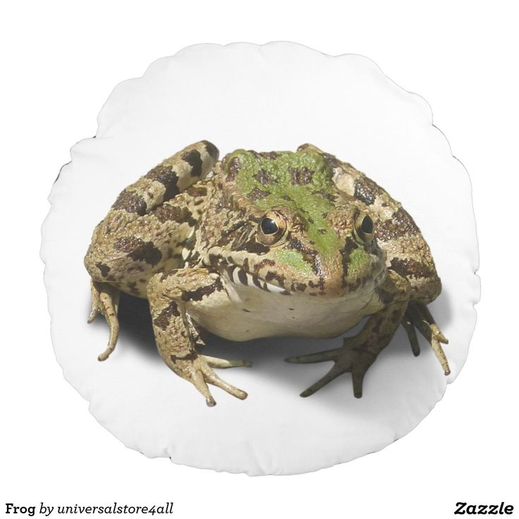 Frog Round Pillow