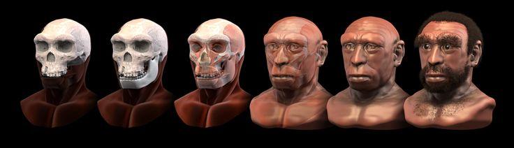 Homo heidelbergensis - forensic facial reconstruction - Homo heidelbergensis - Wikipedia, the free encyclopedia