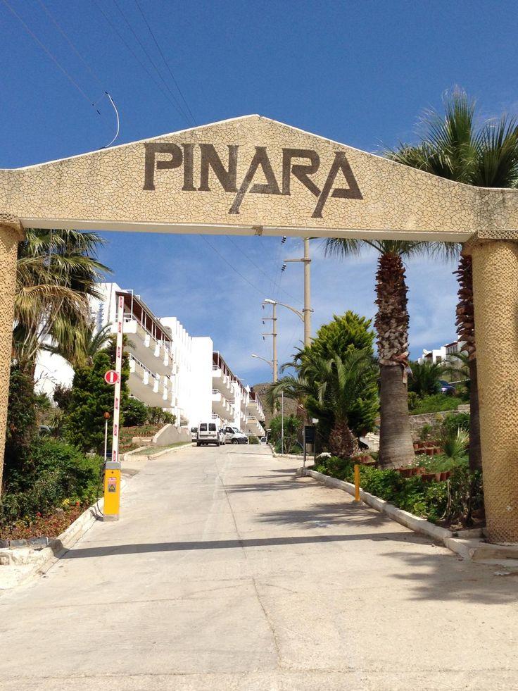 Exim-Pinara