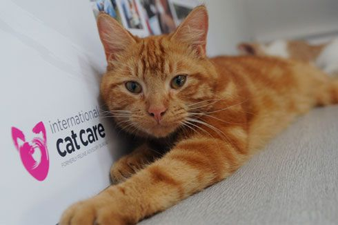 Hi everyone, This time we went to the Annual Awards of International Cat Care. The charity presentedEasy to Give Awards,Cat Friendly Awards, Distance Education Awards, plus awards for the winners...