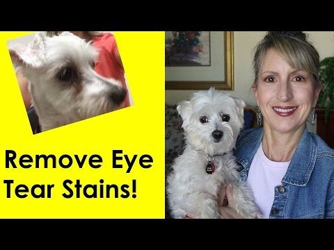 HOW TO REMOVE DOG'S TEAR STAINS! - YouTube