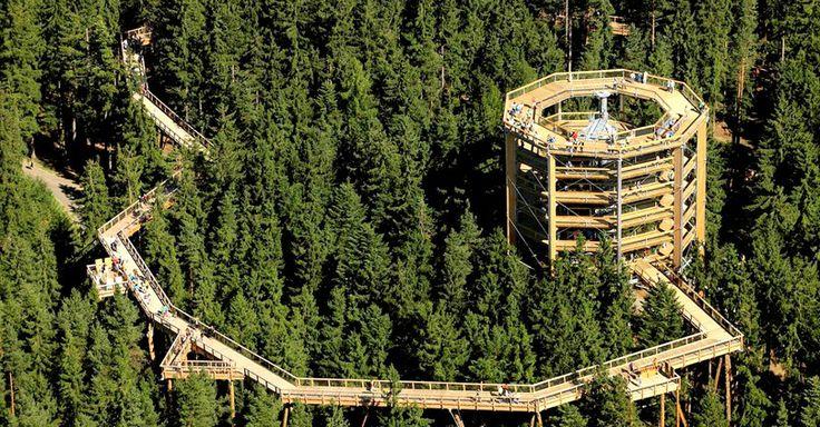 V Bachledke vznikne chodník medzi korunami stromov, ktorý bude podobný tomu českému. (ilustračné foto)