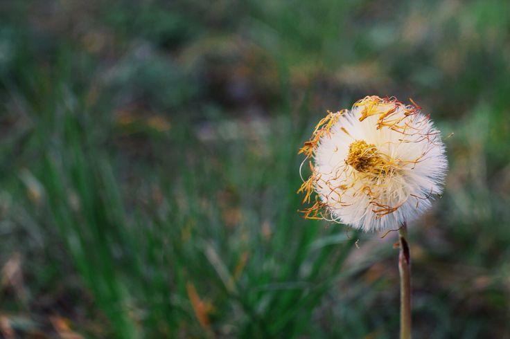 #flower #white #botany
