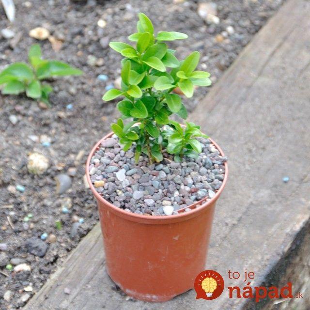 Táto nenápadná rastlina by mala byť v každej záhrade: Neuveríte, akú úžasnú službu tam bude robiť celé roky!