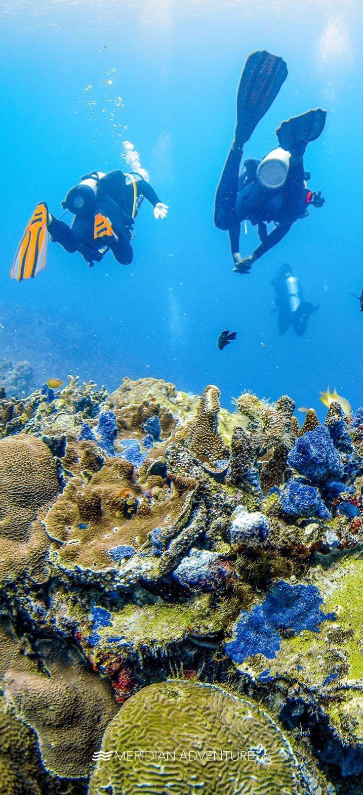 Reef Safari Diving Scuba Diving Marina Resort