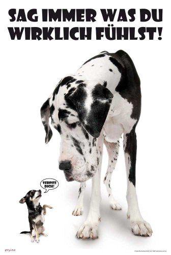 Empire 394897 Hunde – Sag immer was du denkst Poster – 61 x 91.5 cm – Maja Roessler