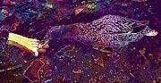 "New artwork for sale! - "" Duck Wild Feeding Water Bird Pond  by PixBreak Art "" - http://ift.tt/2tBinz7"