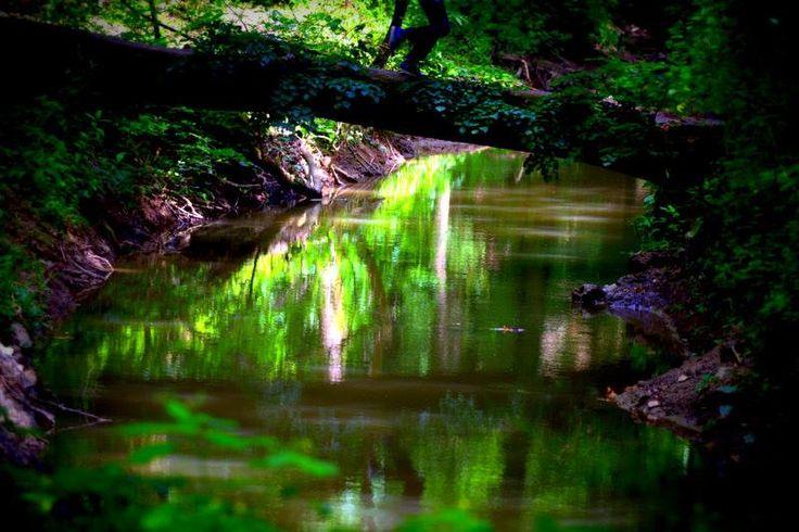 Bakonyi fények Fények,s árnyak húzódnak a fákon,csend van s béke semmi sem zavarja meg e szűzies lágy csendet csak az a csendes surranás,mit a csordogáló víz csap maga körül szent hely e természet,mit a Bakony teremt maga köré megsérteni nem lehet,csak kitárt lélekkel,megállni s csodálni,mit a piciny bolygó nekünk teremtett.  Több kép Gábortól: www.facebook.com/gzelovits