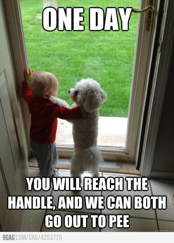 Dogs best friend: Bichon Frise!