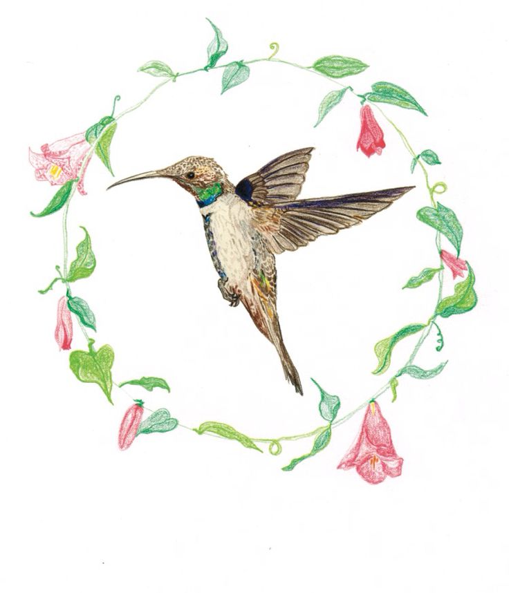 Color pencil drawing. From the collection Flora y Fauna Chilena by Coco & Co