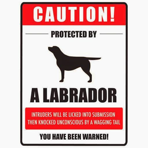 Funny Labrador Dog Sign | Funny Joke Pictures