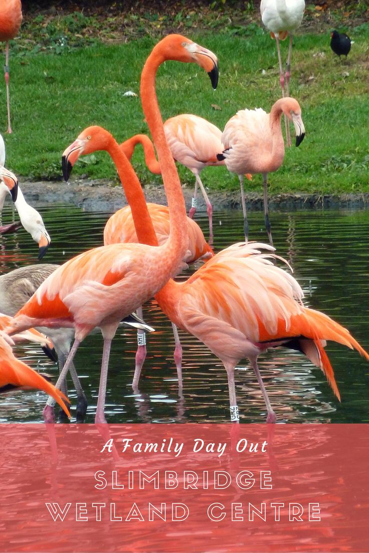 Slimbridge Wetland Centre is ideal for a family day out in winter.  Up to 30,000 birds migrate here for winter.  A great day out especially for kids.