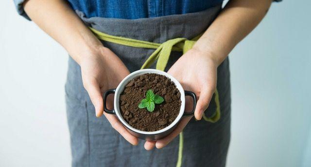 Zielona kawa Pharmovit jest fantastycznym i zdrowszym substytutem dla tradycyjnej małej czarnej. #zielona #kawa #pharmavit | https://mamutpro.pl/zdrowa-zywnosc/pharmovit-zielona-kawa-90-kaps-4215.html