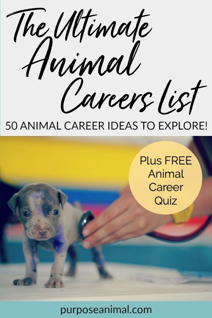 Check out this ultimate animal careers list! You'll find 50 animal career ideas to explore. Plus take the FREE Animal Career Quiz to find out which animal careers would suit you...