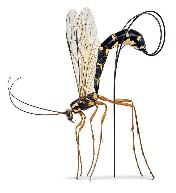 Insekten im Porträt: Krabbeln, Kribbeln, Colour-Blocking   Wissen   ZEIT ONLINE