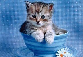 Обои котенок, чашка, цветы