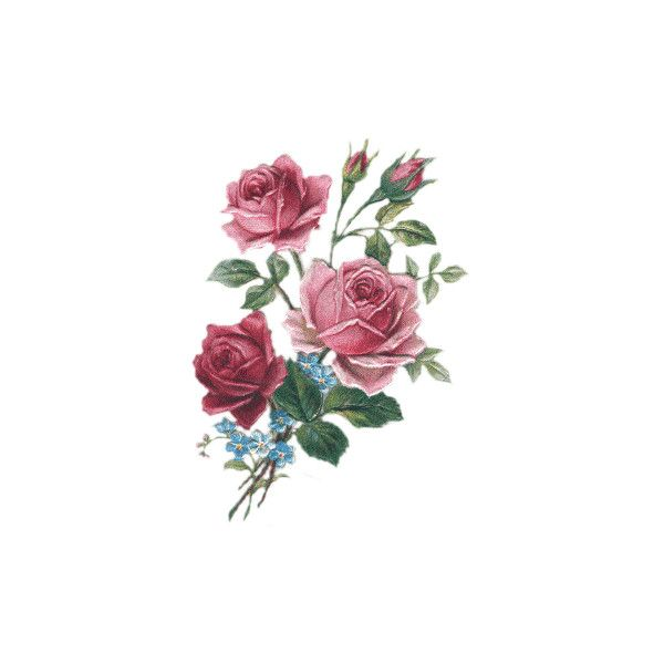 - Fleurs Roses - ❤ liked on Polyvore featuring home, home decor, floral decor, flowers, fillers, roses, flores, fiori, flower stem and rose home decor
