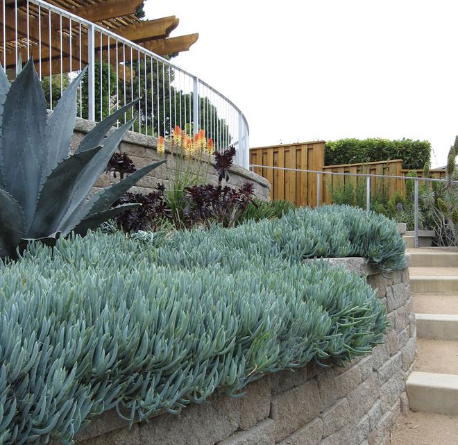 260 best Outdoor Spaces: Drought Tolerant & California Native images Zone Native Garden Design on butterfly garden zone 9, garden design home, garden design canada, fall garden zone 9, garden design zone 6, garden design zone 5, garden design zone 4, garden design zone 8,