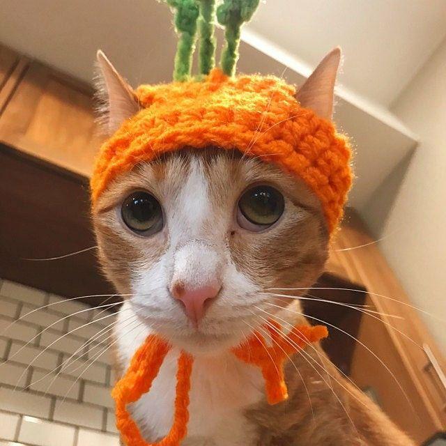 Vegetables Carrots Hats For Cats Cat Hat Cat Costumes Cat Etsy Hats For Cats Cat Hat Hat For Cat