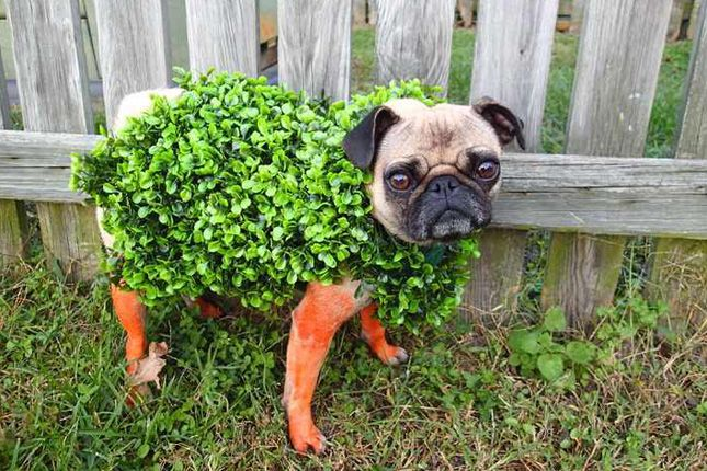 Woof! Announcing the Winners of Our Dog Costume Contest! via Brit + Co.