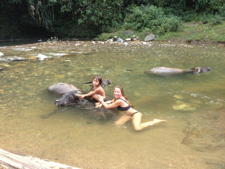 Un maravilloso baño con los búfalos y los niños del poblado Cat-Cat - Sapa.
