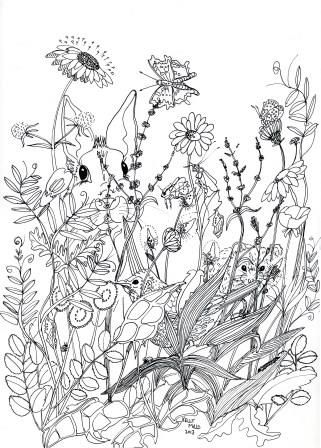 drawing wildflowers Google Search