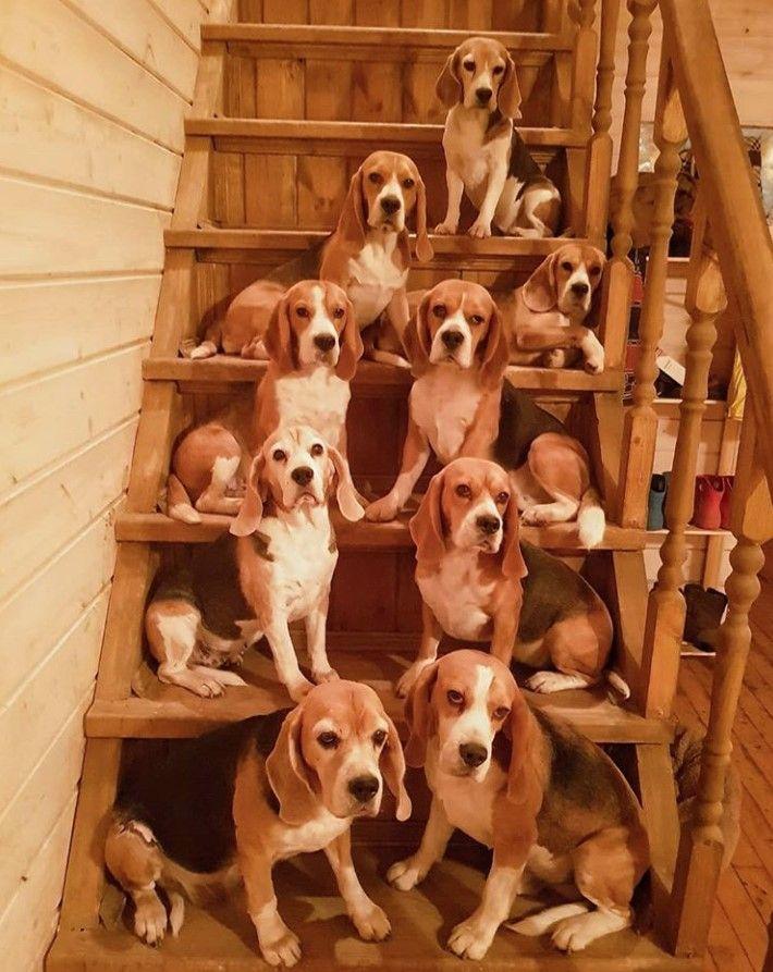 100 Beagle Male Dog Names The Paws Beagle Dog Beagle Puppy I