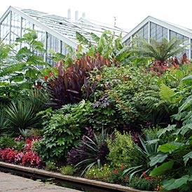 Close planting, variety of colour.