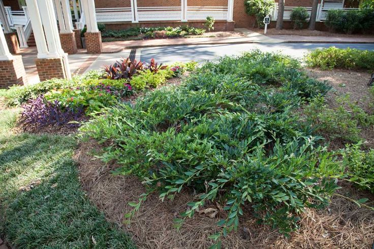 Landscaping Yard Small