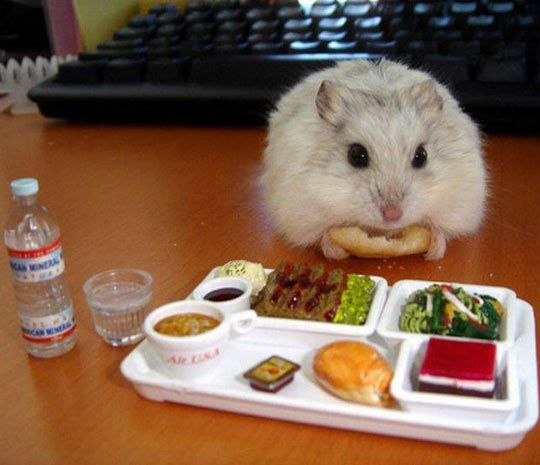 Tiny Hamster Enjoying A Tiny Nutritious Lunch (someone has way too much time on their hands)