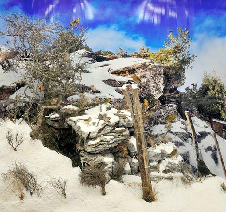 Ricostruzione dell'ambiente montano del Gennargentu - Sardegna rappresentante la geologia, la fauna e la flora  Museo zoologico Università di Cagliari.