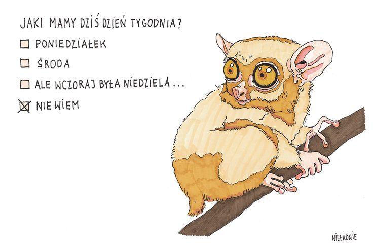 #logika #psychotest #poniedziałek #środa #niedziela #niewiem #wiemżenicniewiem #mądrość  #storyofmylife #nieładnie #nieladnierysuje #ilustracja #kamila #szcześniak #illustration #rysunki