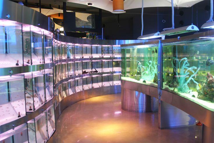 kelyphos - Aquarium Shop