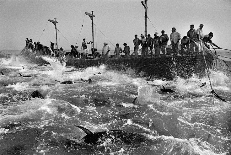 La Mattanza, pesca tradicional do atum. Trapani, Sicília, Itália. 1991 Projeto: Trabalhadores ©Sebastião Salgado/Amazonas images
