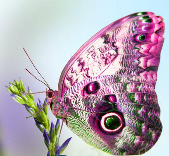 Oh!Qué bonita mariposa en colores rosados y verde.