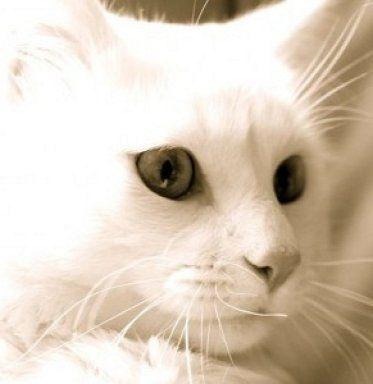 El gato reconoce la voz de su amo