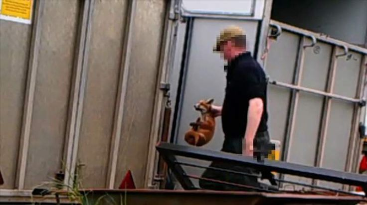 Fox cubs filmed being fed to hounds in kennels the fox