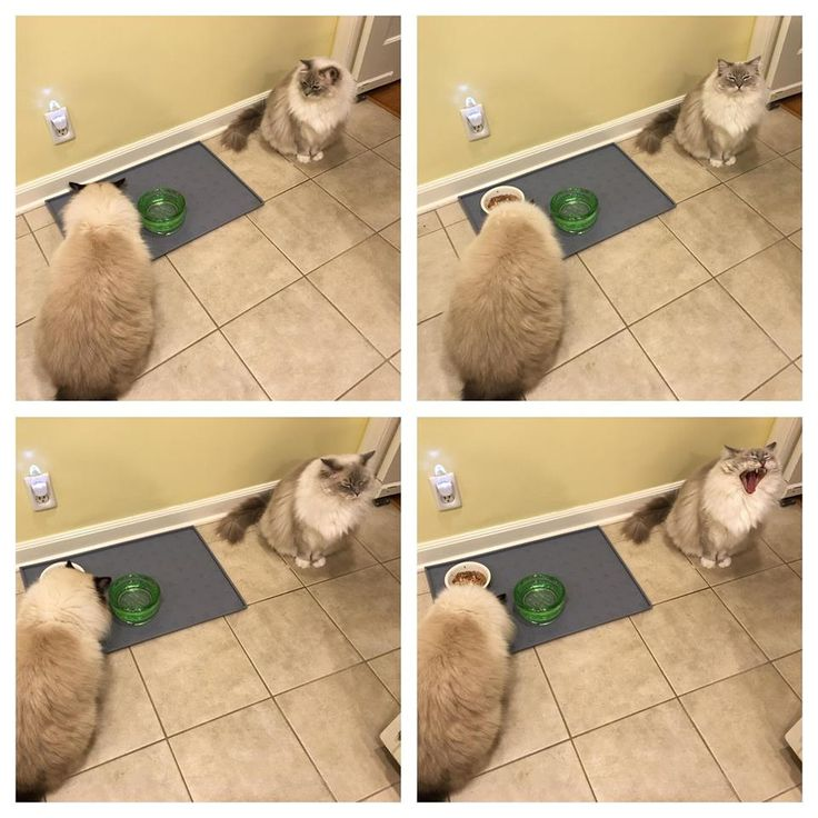 8 best cat poops outside of the litter box images on pinterest