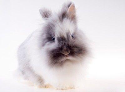 H&M zet productie met angorawol stop wegens dierenmishandeling.