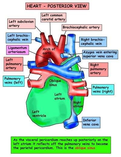 Free CPR Study Guide