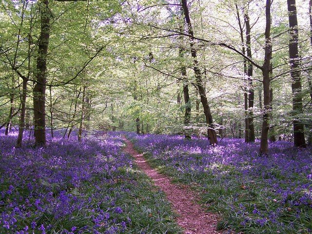 Head outside with the crisp air and blue skies for a country walk this spring http://bit.ly/spring-walks