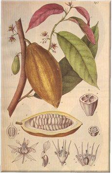 Der Cacao und die Chocolate by Alfred Mitscherlich, Berlin 1859